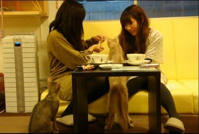 The Latest Japanese Cafe -- The Cat Cafe